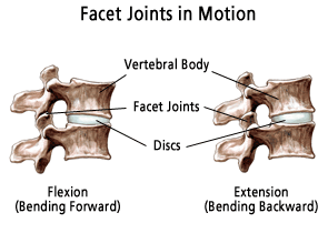 facet-joints.png